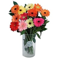 Arrangement of Gerberas
